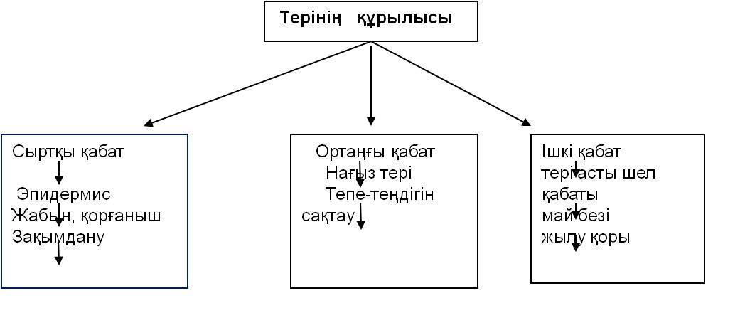 ter-1